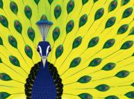 sliderocket peacock sales engagement presentation